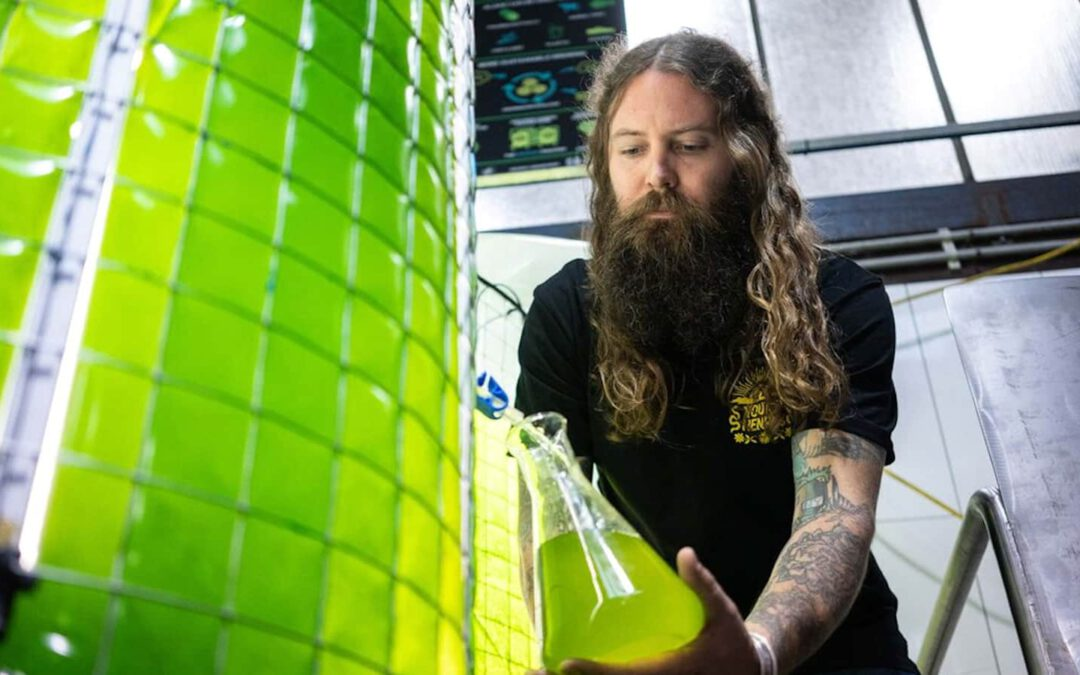 Une brasserie Australienne intègre des algues dans sa production de bière